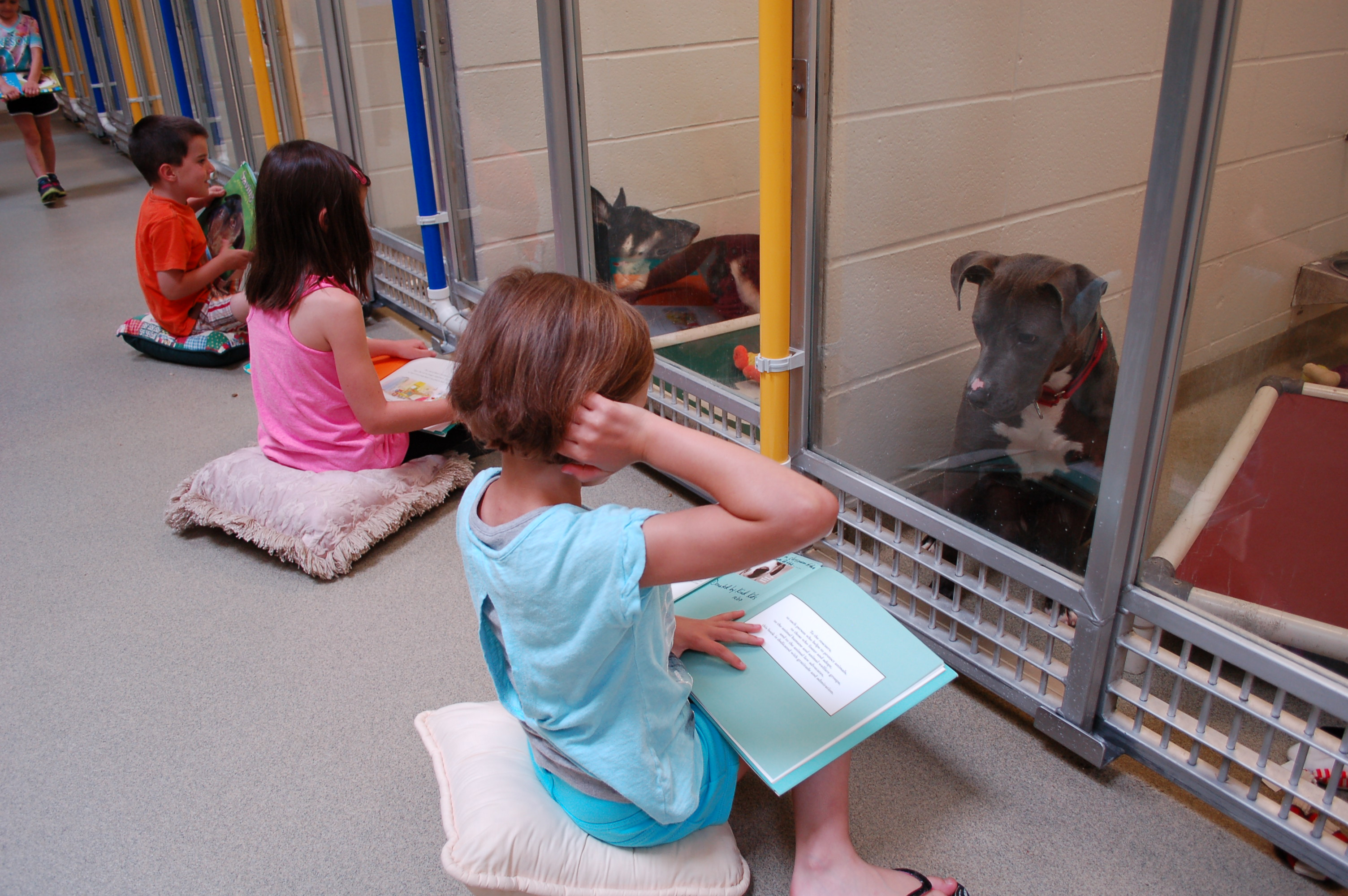 Shelter Buddies Reading Program - children read to dogs