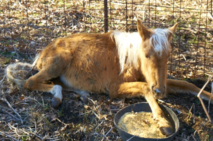 Tumbleweed the horse on the day of rescue