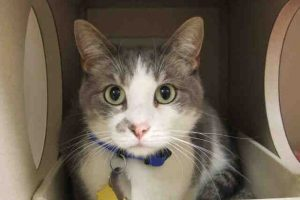 Bugsy-A636115