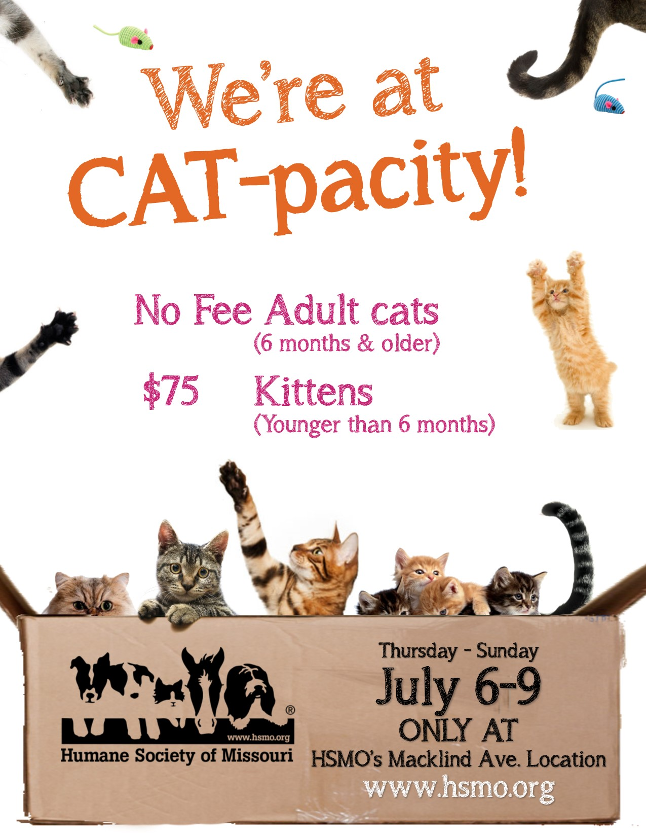 Visit the HUmane Society of Missouri's 1201 Macklind location July 6-9 for no fee cat adoptions
