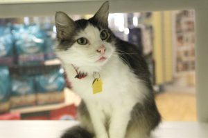 Poppy available for adoption at HSMO