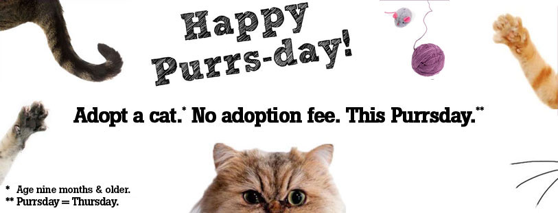 Adopt a Cat on Purrsday for no adoption fee!