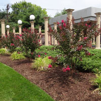crepe myrtles for donation sponsorship at throop park