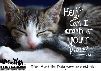 Become a foster parent at the Humane Society of Missouri!