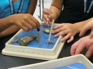 Children dissecting a frog for science