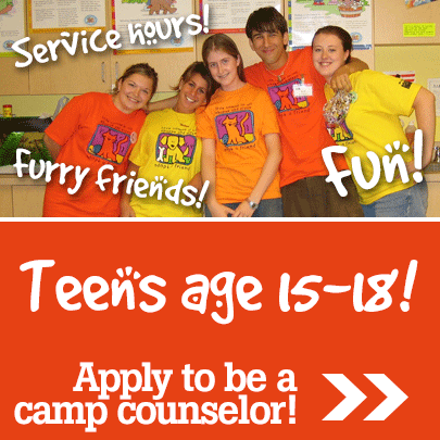 Summer Camp Counselor application button
