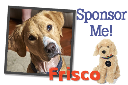 Sponsor Fur-Ever Friend Frisco