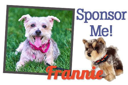 Sponsor FurEver Friend Frannie!