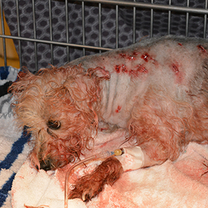 Frannie, stabbed 19 times, recovering at HSMO