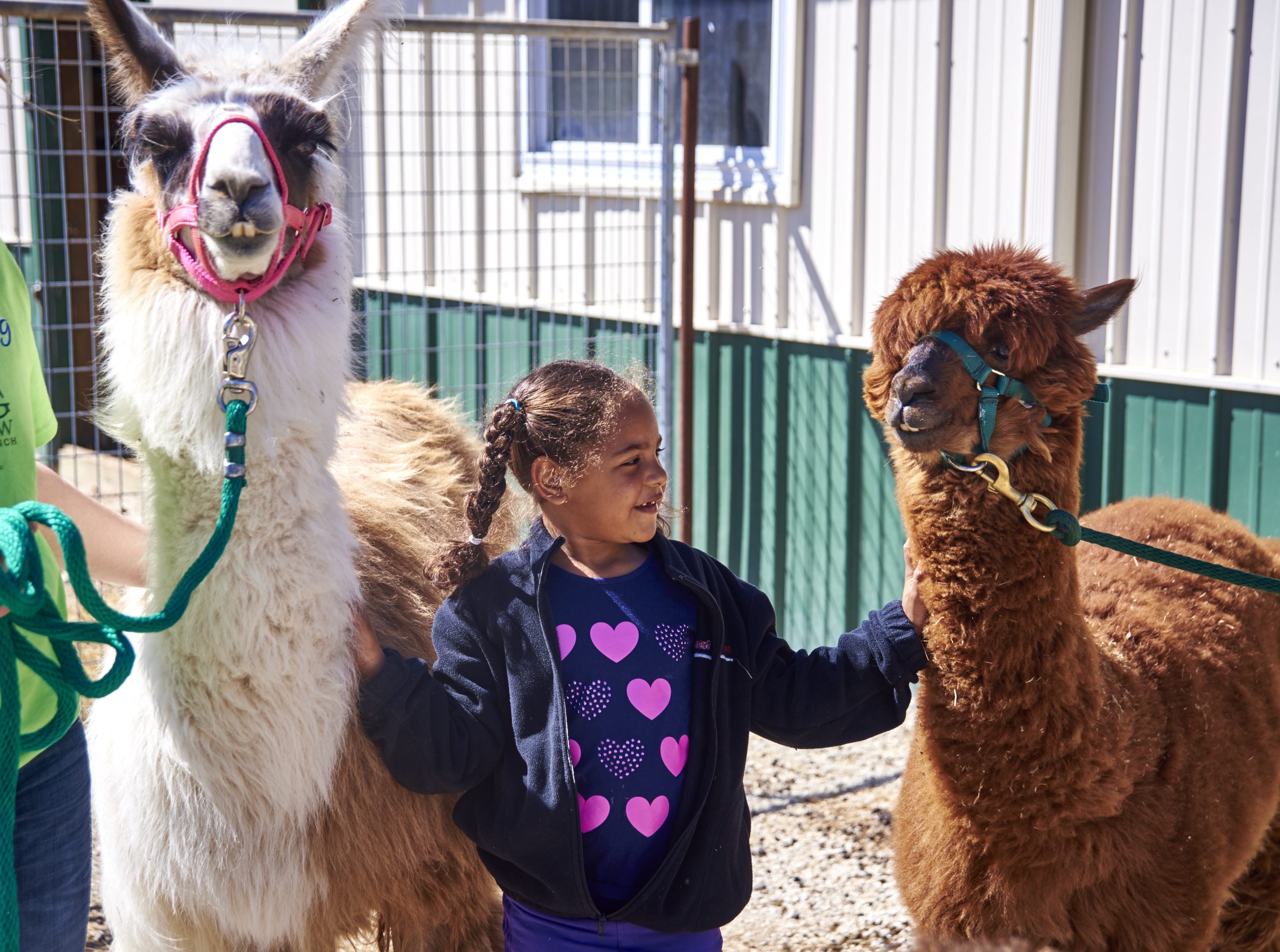 Kids love Longmeadow Rescue Ranch