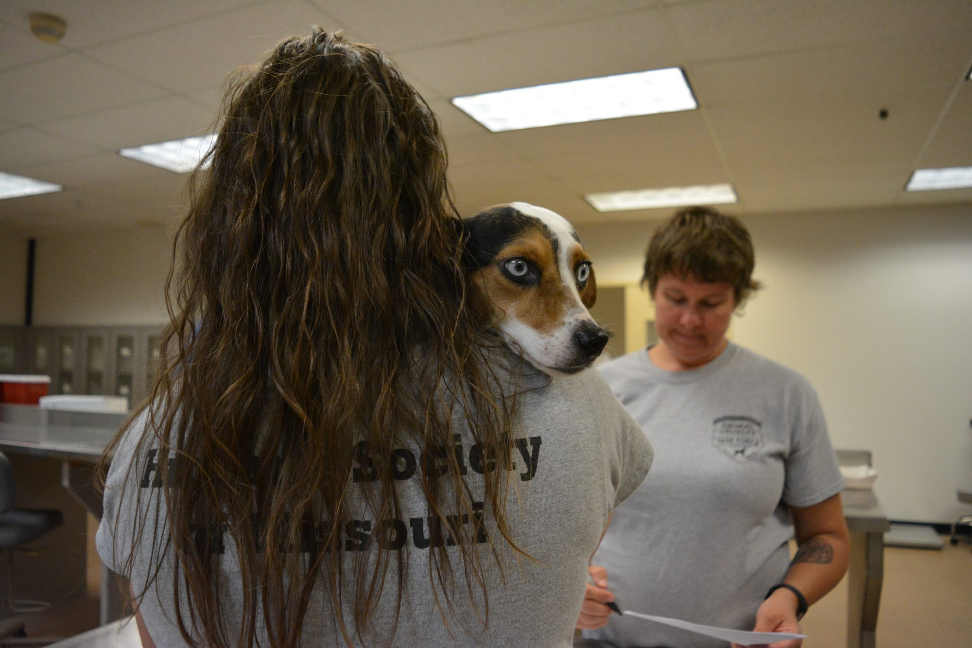 Dogs from Houston are cuddled and checked in at HSMO