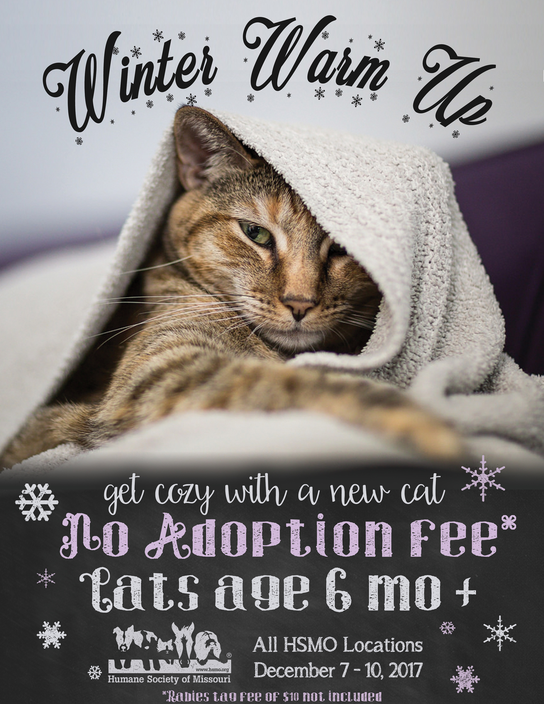 HSMO Winter Warm Up no fee cat adoption special in St Louis