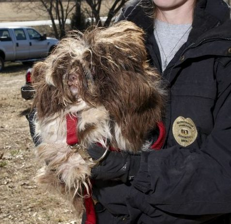 Dog rescued from Newton County Puppy Mill by HSMO Animal Cruelty Task Force