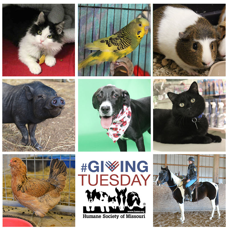 Giving Tuesday is November 28, 2017