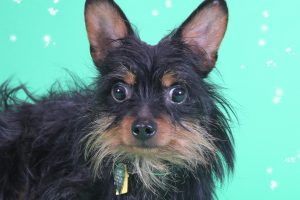 Buster-A643658