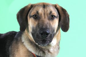Buster-A645681