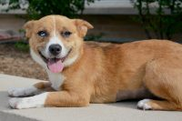 Lizzy-A654451