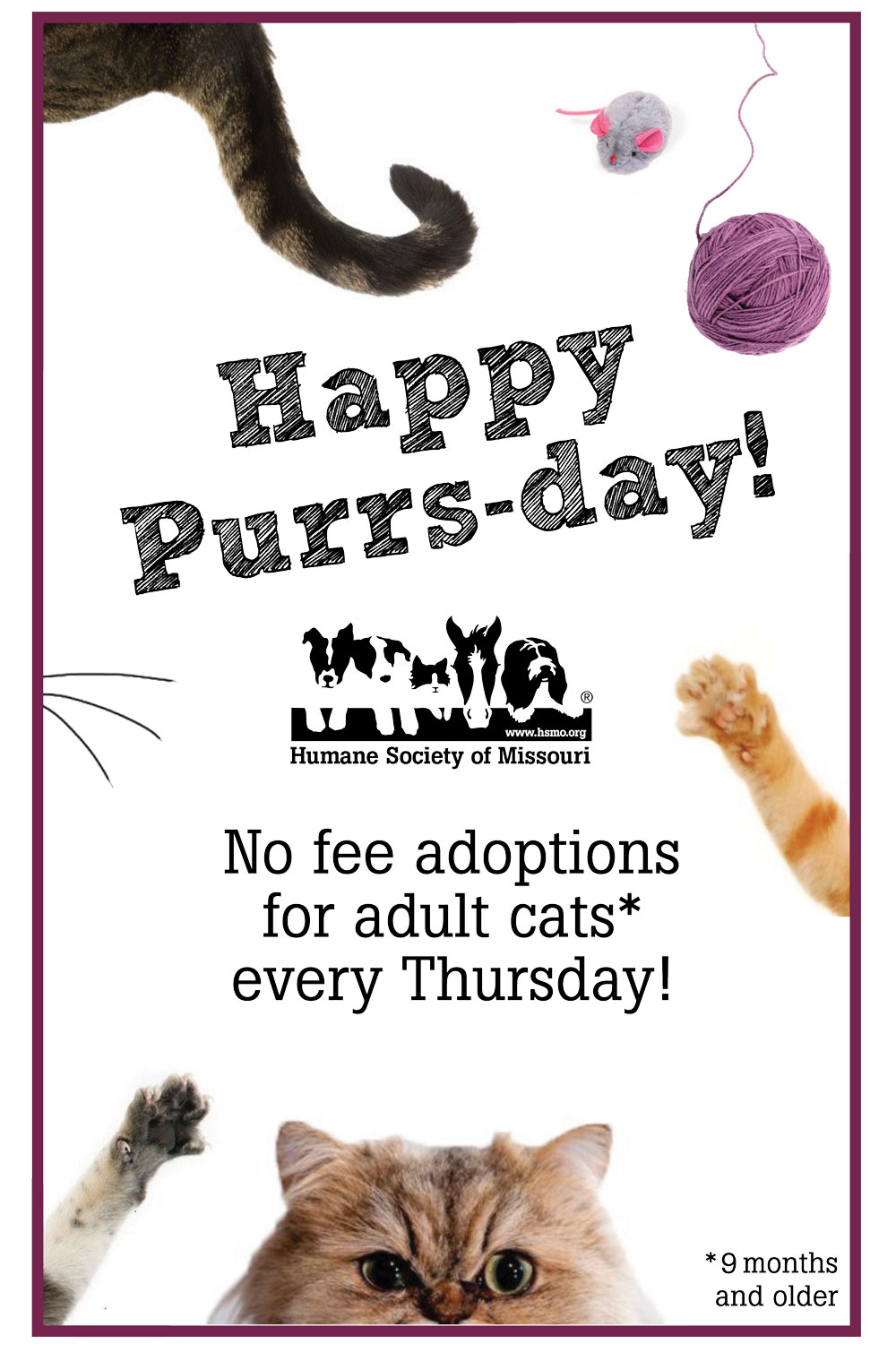 Every Thursday is PURRSday!