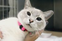 Sweetie-A647355