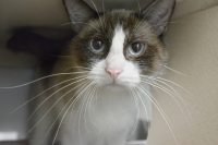 Lilly-A658421