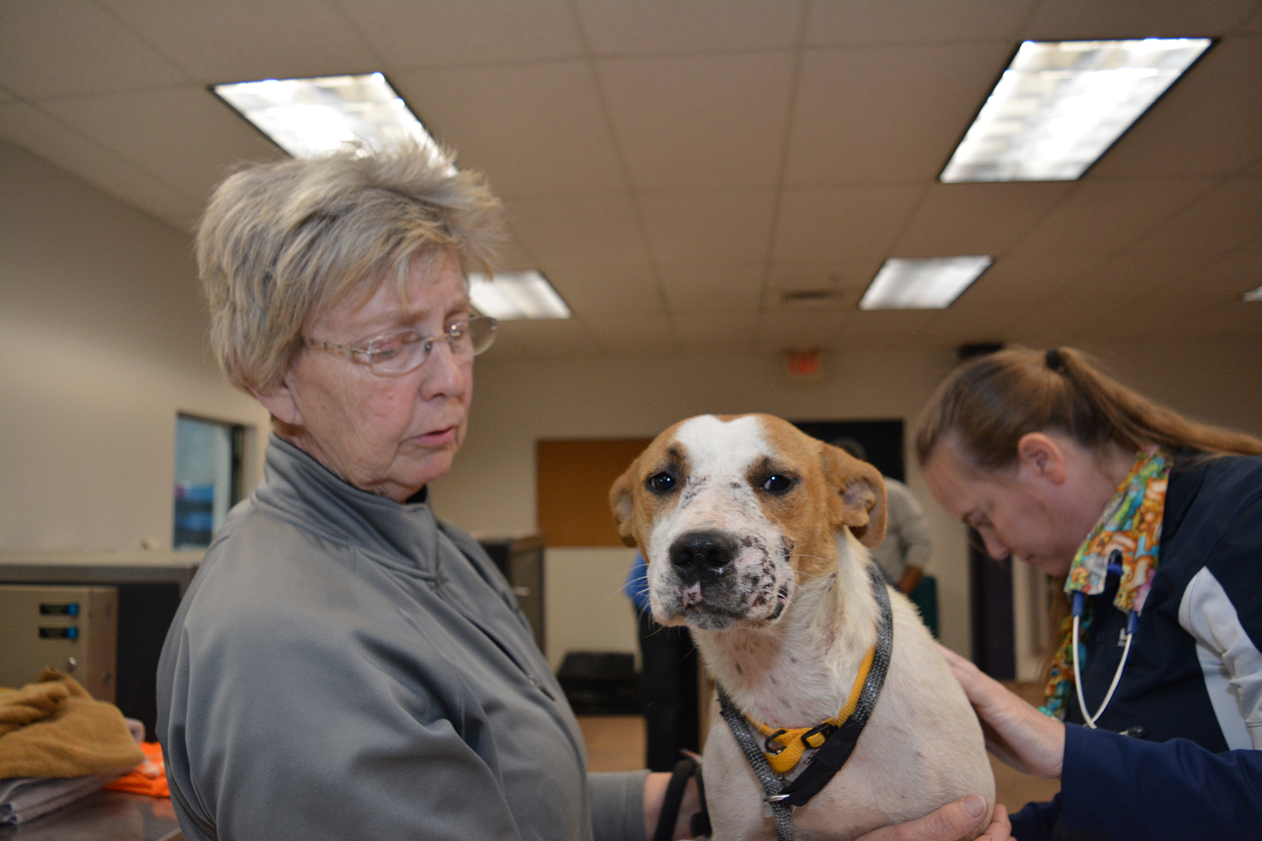 Lincoln County: 36 Animals Rescued from Neglect - Humane