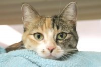 Zoey-A661347